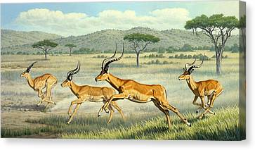 On The Run -  Impala Canvas Print by Paul Krapf
