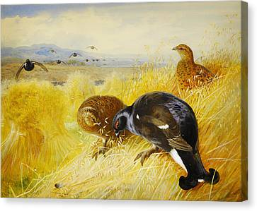 On The Stooks - Blackgame Canvas Print by Celestial Images