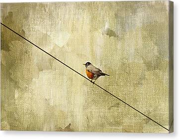 On The Wire Canvas Print by Rebecca Cozart