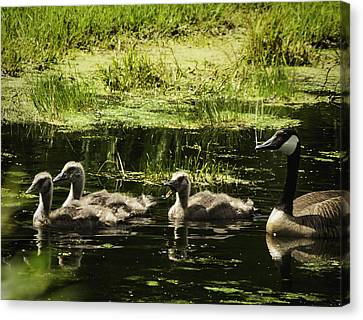 One Honk Says It All Canvas Print by Thomas Young