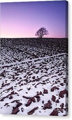One More Tree Canvas Print by John Farnan