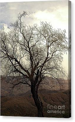 One Tree Canvas Print by Kathleen Struckle