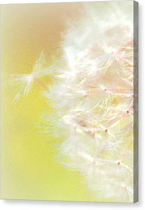 One Wish Canvas Print by  The Art Of Marilyn Ridoutt-Greene