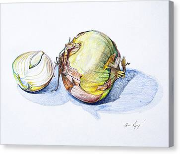 Onions Canvas Print by Aaron Spong