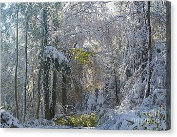 Onset Of Winter 1 Canvas Print by Rudi Prott