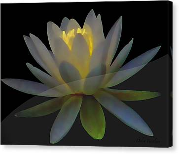 Opal Lotus Swish Canvas Print by Debra     Vatalaro