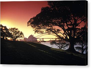 Opera Tree Canvas Print by Sean Davey
