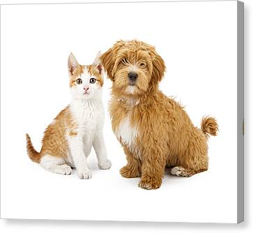 Orange And White Puppy And Kitten Canvas Print by Susan  Schmitz