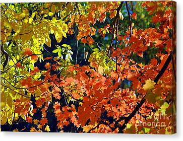 Orange And Yellow Canvas Print by Kathleen Struckle