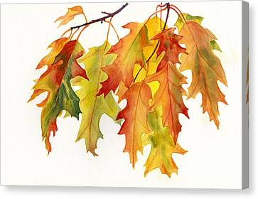 Orange And Yellow Oak Leaves Canvas Print by Sharon Freeman