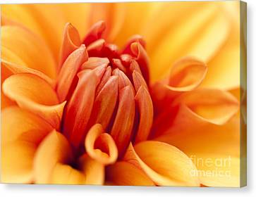 Orange Centre Canvas Print by Anne Gilbert
