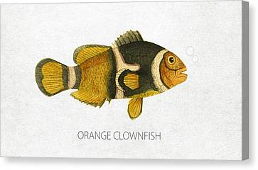 Orange Clownfish Canvas Print by Aged Pixel