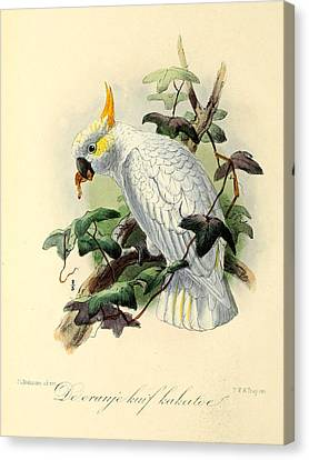 Orange Cockatoo Canvas Print by J G Keulemans