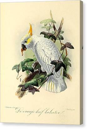 Orange Cockatoo Canvas Print by J G Keulemans