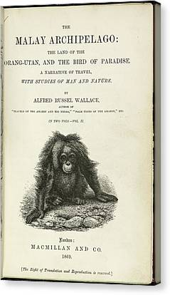 Orangutan Canvas Print by British Library
