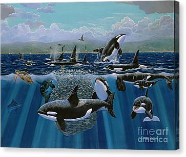 Orca Play Re009 Canvas Print by Carey Chen