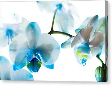 Orchid Closeup Canvas Print by Boon Mee