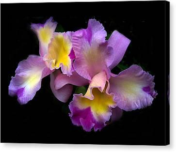 Orchid Embrace Canvas Print by Jessica Jenney