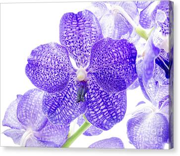 Orchid Flower Canvas Print by Boon Mee
