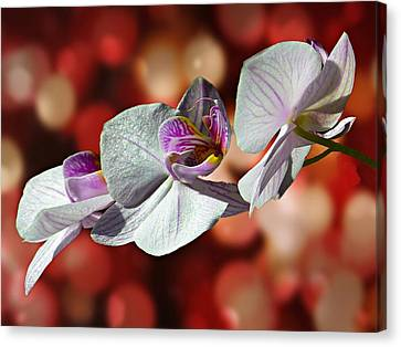 Orchid Flower Photographic Art Canvas Print by David Dehner