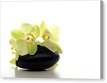 Orchid Flowers On Polished Stone Canvas Print by Olivier Le Queinec