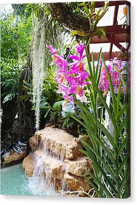Orchid Garden Canvas Print by Carey Chen