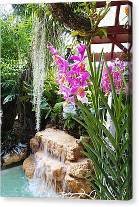 Orchid Garden Canvas Print by Carey Chen