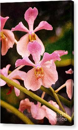 Orchid Number 17 Canvas Print by Floyd Menezes