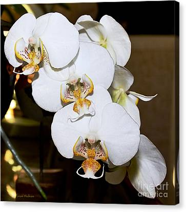 Orchid Phalaenopsis Dutch Lady Canvas Print by Susan Wiedmann