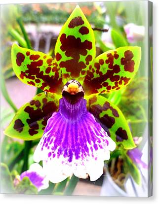 Orchid Canvas Print by The Creative Minds Art and Photography