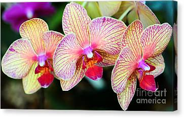 Orchid Trio Canvas Print by Kathleen Struckle