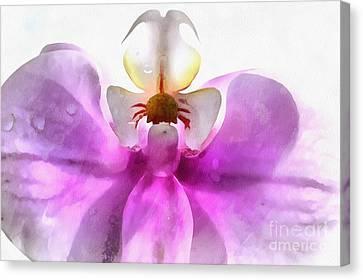Orchid Zen Canvas Print by Krissy Katsimbras