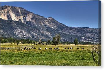 Oreo Cows Canvas Print by Donna Kennedy