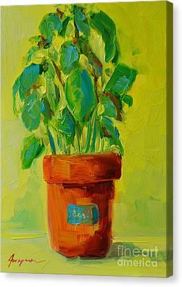 Organic Basil Plant Still Life Canvas Print by Patricia Awapara