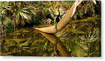 Oriental Darter Anhinga Melanogaster Canvas Print by Panoramic Images