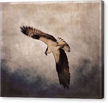 Osprey Over The Columbia River Canvas Print by Carol Leigh