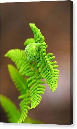 Ostrich Fern Canvas Print by Christina Rollo