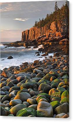 Otter Cliffs At Sunrise Canvas Print by Stephen  Vecchiotti