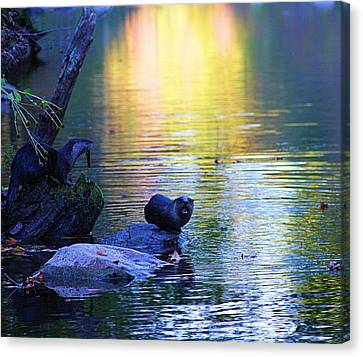 Otter Family Canvas Print by Dan Sproul