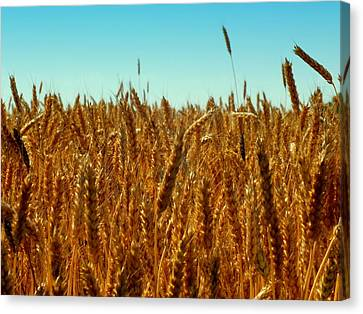 Our Daily Bread Canvas Print by Karen Wiles