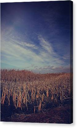 Our Day Will Come Canvas Print by Laurie Search