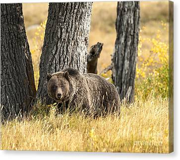 Out For Lunch Canvas Print by Sandra Bronstein