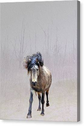 Out Of Nowhere Canvas Print by Patricia Keller