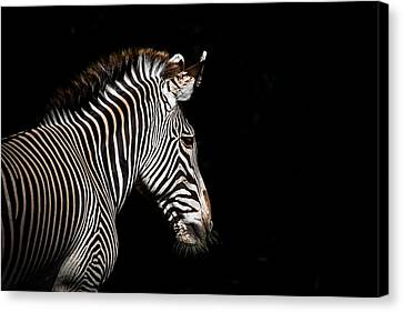 Out Of The Shadows Canvas Print by Scott Mullin