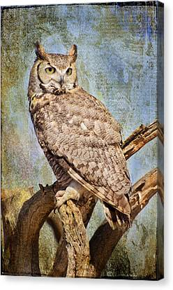 Owl On A Tree Canvas Print by Barbara Manis