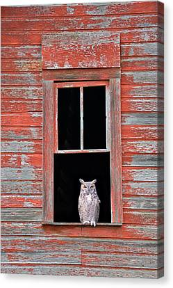 Owl Window Canvas Print by Leland D Howard