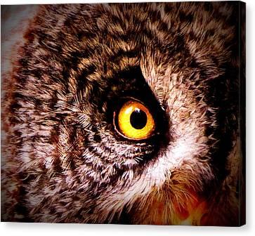 Owl's Eye Canvas Print by Ramona Johnston