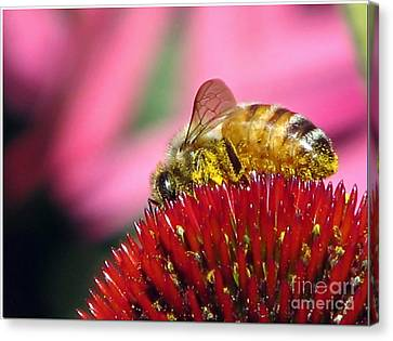 P2 The Pollenator Canvas Print by Chris Anderson