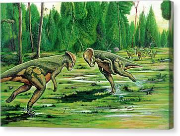 Pachycephalosaurus Fighting Canvas Print by Deagostini/uig