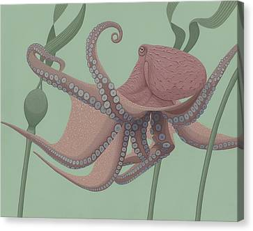 Pacific Giant Octopus Canvas Print by Nathan Marcy